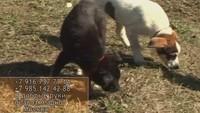 Собака в доме 1 сезон 11 выпуск
