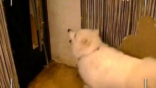 Собака в доме 1 сезон 16 выпуск