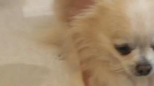 Собака в доме 1 сезон 17 выпуск