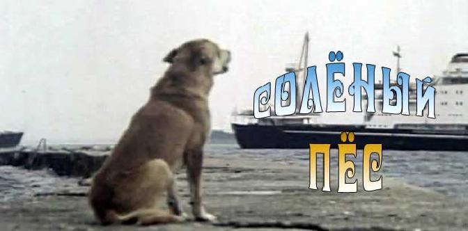 Смотреть Соленый пес