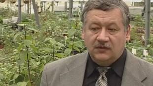 Свежая зелень 1 сезон Подготовка семян для рассады