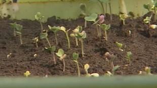 Свежая зелень 1 сезон Сад и огород в марте