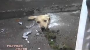 Улетное видео по-русски! 1 сезон 49 выпуск