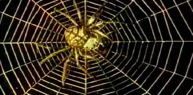 Смотреть Золотой паук