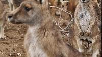 Выживание в дикой природе Сезон-1 Тайная жизнь сумчатых